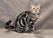 Мраморный котик- вязки